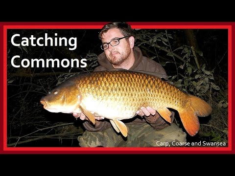 *** Carp Fishing *** Catching Commons On The Fendrod. Video 143