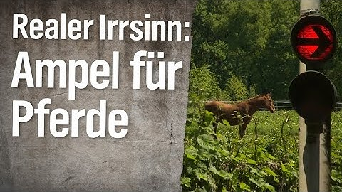 Realer Irrsinn: Bahnampel vor Pferdekoppel | extra 3 | NDR