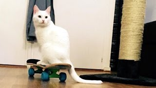 ANISSA THE CAT SKATEBOARDING | First Time Skateboarding and Singing: They see me rollin. They hatin.