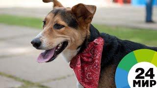 Выставка собак в Алматы: участники брали харизмой и послушностью - МИР 24