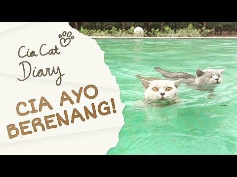 Cia Cat Diary - Ep 16 - Cia Ayo Berenang