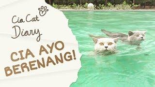Cia Ayo Berenang - Cia Cat Diary - Ep 16
