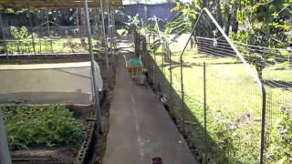 Organic Farming in the Philippines (Welcome to the Eco Backyard Farm, planting season)