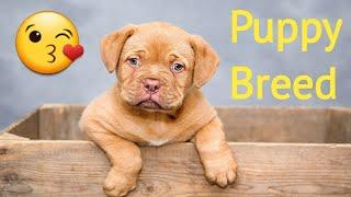 | Great job cute puppy | pet | dogs | Animal | canine | Animal2Pet xyz | #pet_animal #puppy