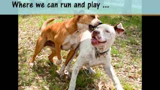Wags, Hope And Healing - Happy Thanksgiving! - Austin Tx Dog Rescue And Adoption