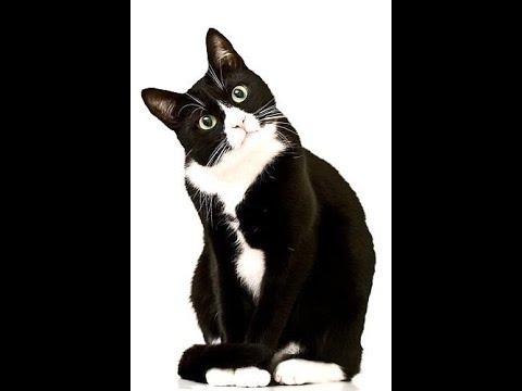 FUNNY Cats do what humans do cute اضحك مع القطط وتعجب