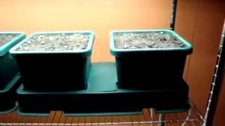 Εσωτερική καλλιέργεια με autopot