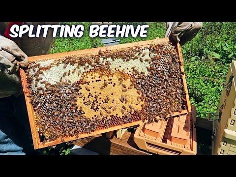 Beekeeping - Walk Away Beehive Split