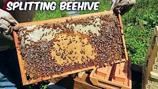 Beekeeping - Walk Away Beehive Split