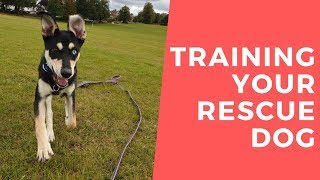 Rocky - Training Your Rescue Dog From Abroad