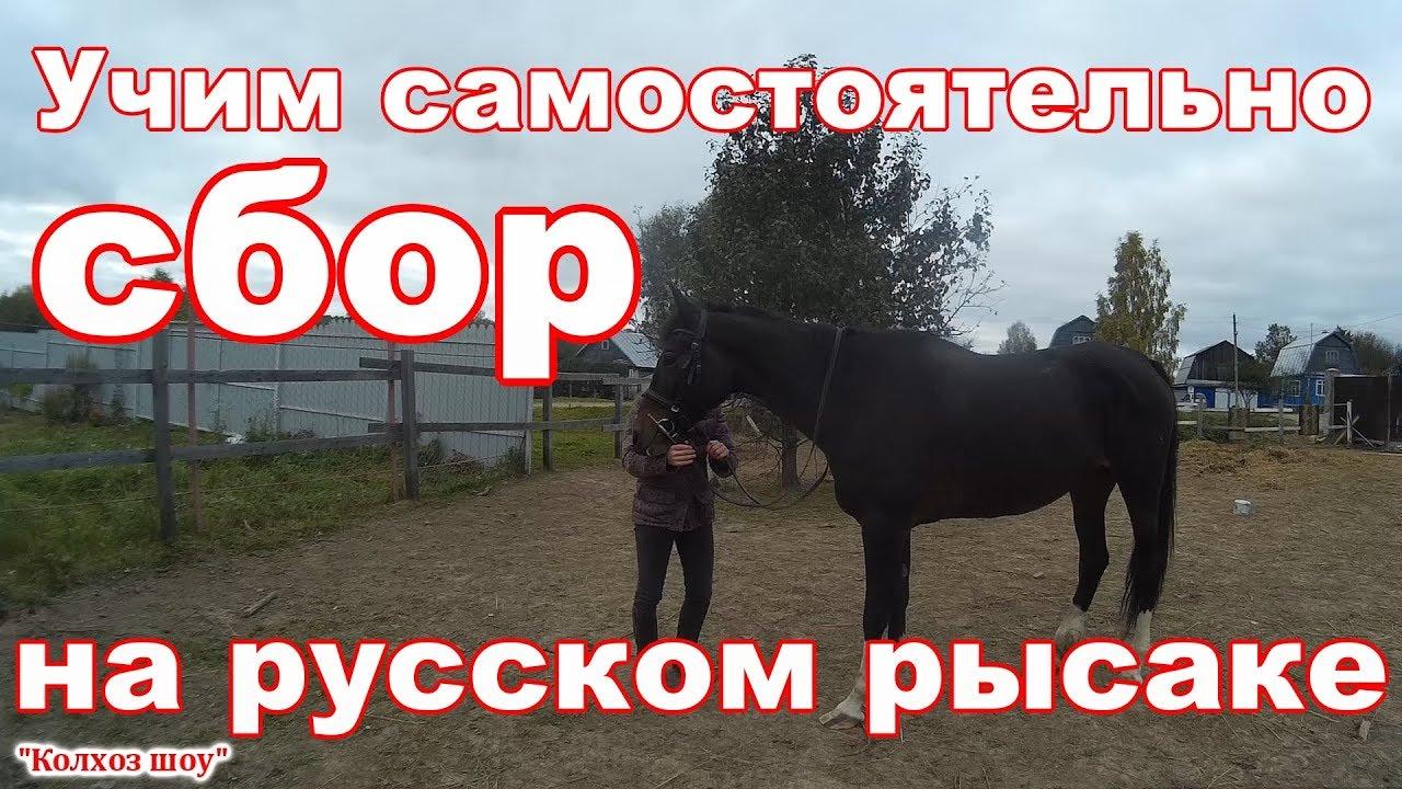 Базилевс, продажа лошади - YouTube