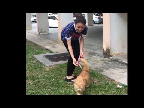 Baby shima dan kucing kesayangan😘