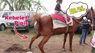 Kudanya Kebelet Pipis !! Nyobain Lagi Naik Kuda di Car Free Day
