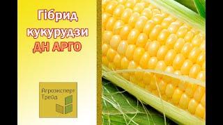 Кукуруза ДН Арго в Украине