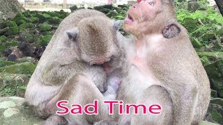 Pitiful Popeye Is Missing Her Baby Polly / Good Son SP Try To Ask Popeye For Stop Sad More / PTM 783