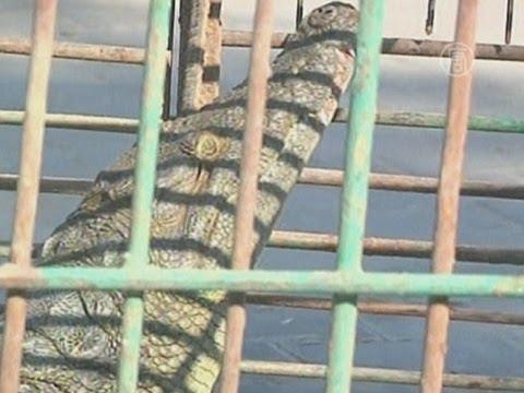 Вопрос: Как можно назвать домашнего крокодила?