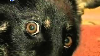 Верхней Салде в лесу нашли собаку в мешке