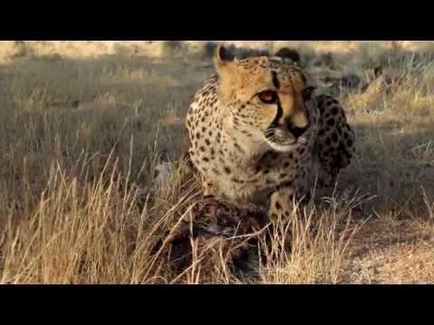 African Safari - Namibia 2015