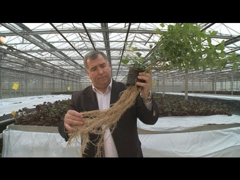euronews innovation - Milking plants