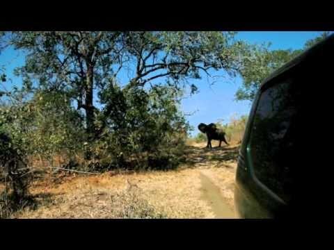 Malawi Landscapes & Animals Slideshow