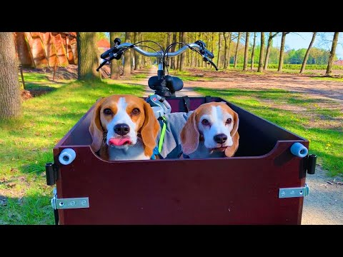 Dogs Cargo Bike Voyage : Funny Dogs Louie and Marie