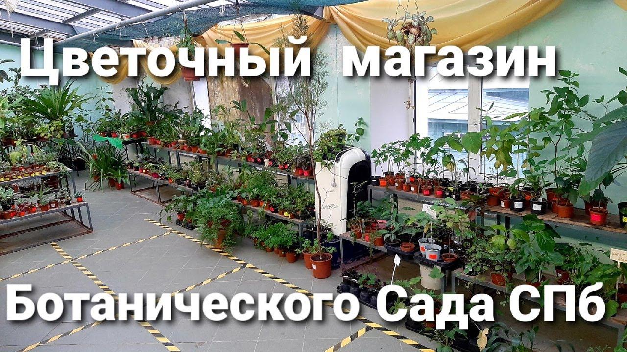 Магазин растений Ботанического Сада/ Мои очередные новички