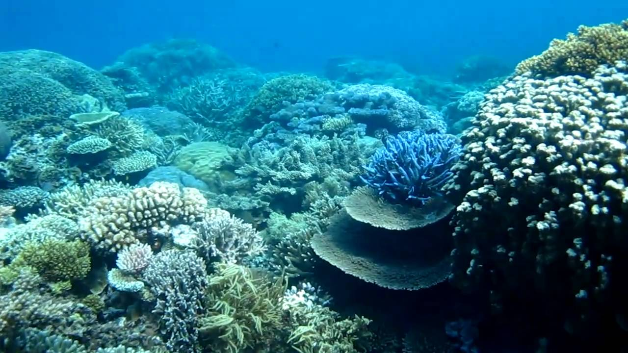 best snorkeling australia great barrier reef youtube