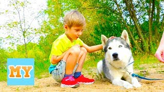 Bingo dog song with Husky dog - Nursery Rhymes Song for kids