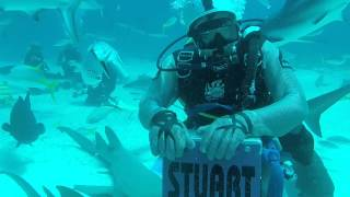 Video Bahamas Shark Diving 2015 download MP3, 3GP, MP4, WEBM, AVI, FLV Mei 2018