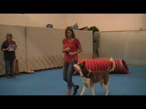 AKC Trick Dog Novice Test