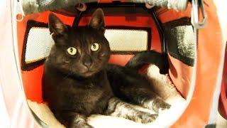 Katzentransport leicht gemacht - Transportbox