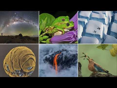 Stunning Royal Society photos showcase nature's beauty