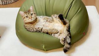 休日のおじさん猫の様子がこちらです!