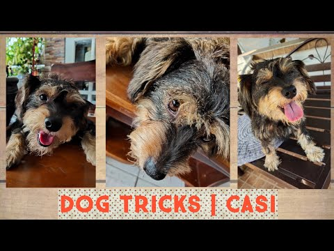 DOG TRICKS | CASI