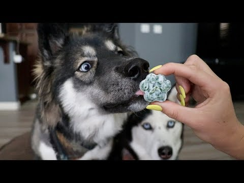 3 DIY Hacks To Clean Your Dogs Teeth!