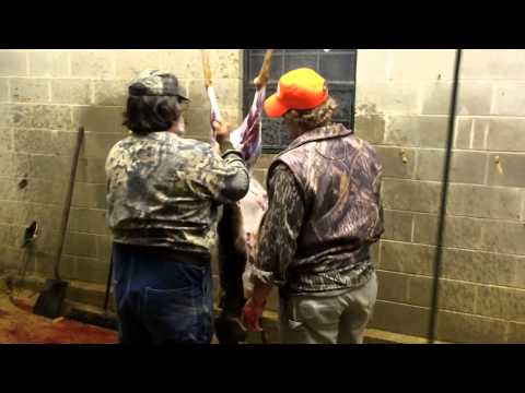 How To Clean And Gut Whitetail Deer Bent Creek Lodge Alabama