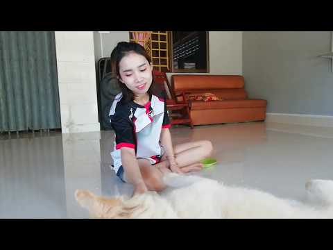 SMART DOG TOTO SO HEAVY, GIRL HAS GOOD TIME TO PLAYFUL WITH