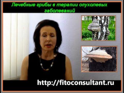 Чага (березовый гриб) - полезные свойства