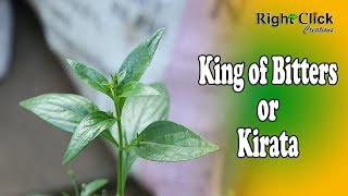 King of Bitters / Kirata - Its used as Ayurveda medicine. Good remedy for diabetes.