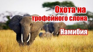 Охота на трофейного слона, Намибия (RUS)