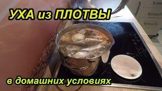 Уха из Плотвы. Рецепт приготовления блюда.
