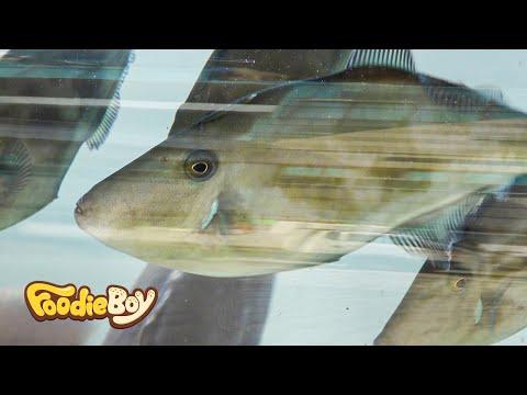 Raw Filefishes / Korean Street Food / Nampo-Dong, Busan Korea