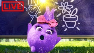 🔴 LIVE 🔴 SUNNY BUNNIES | BACK TO SCHOOL SPECIAL COMPILATION | Funny Cartoons for Children