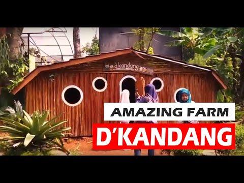"""trip-to-amazing-farm-""""d'kandang-depok"""