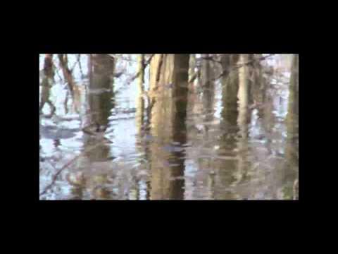 Johnson Woods State Nature Preserve Wayne County Ohio