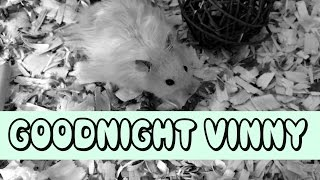 GOODNIGHT VINNY October 10 2014 Thumbnail