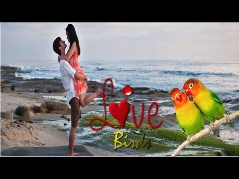 Hindi Audio story - love birds