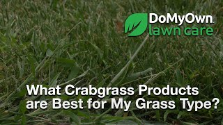 What Crabgrass Products Are Best for my Grass Type? - Weed Control Tips