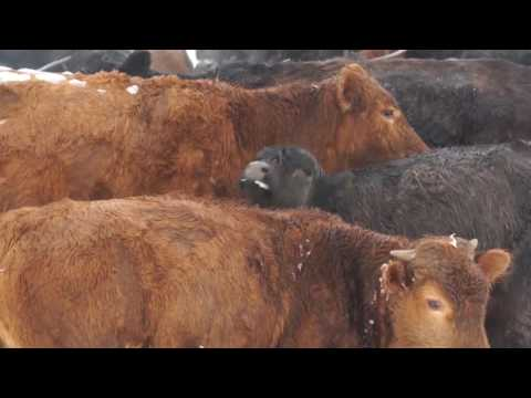 6/4/2016 U.S. Farm Report