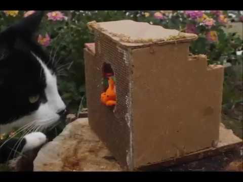 el-libro-de-los-xiyos:-los-gatos-(outdoors-fictional-clay-animation-documentary)